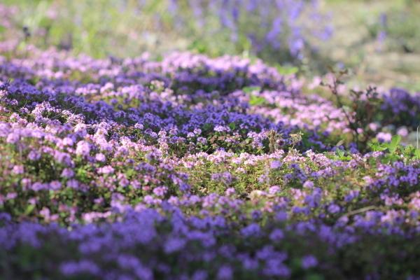 ~ 春の庭にて ~_e0242721_09001891.jpg