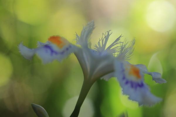 ~ 春の庭にて ~_e0242721_09013755.jpg