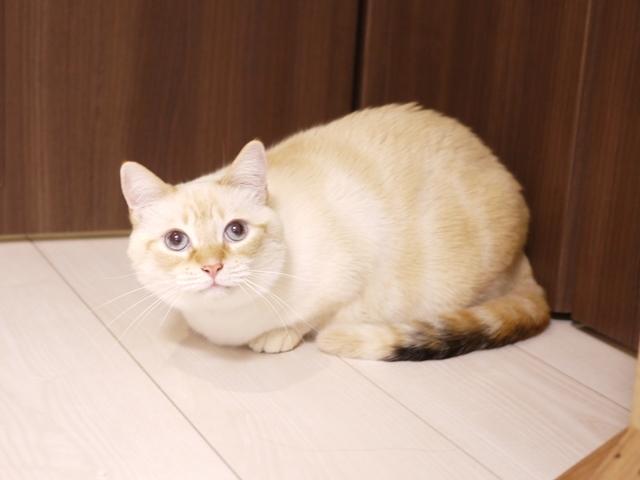 猫のお留守番 いくらちゃん編。_a0143140_22184662.jpg