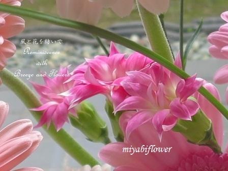 ♪お花の中では一番好きな花_b0255144_00060746.jpg