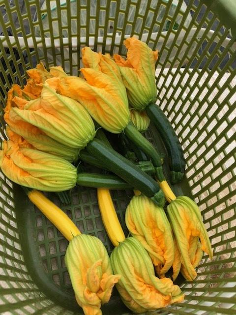 今週はズッキーニの花&蚕豆 グリンピース スナップエンドウが まさに旬です ジョイアオリジナル料理に沢山登場いたします_c0222448_14555254.jpg