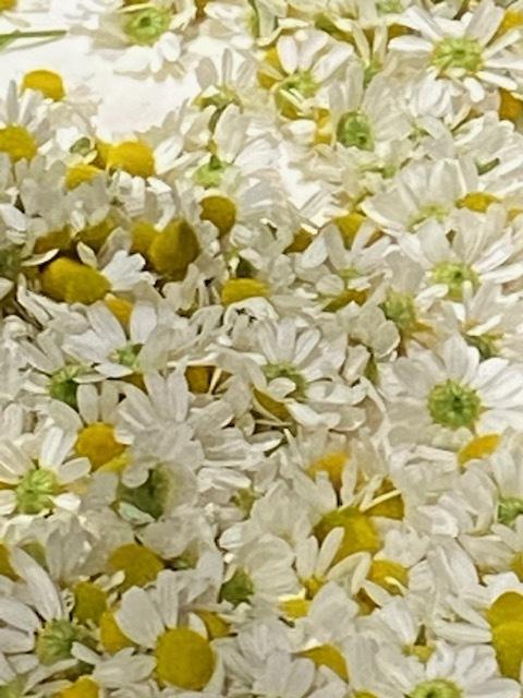 今週はズッキーニの花&蚕豆 グリンピース スナップエンドウが まさに旬です ジョイアオリジナル料理に沢山登場いたします_c0222448_14570004.jpg