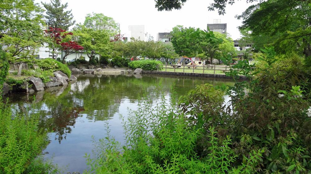 新緑の東金・中央公園_b0114798_16523005.jpg