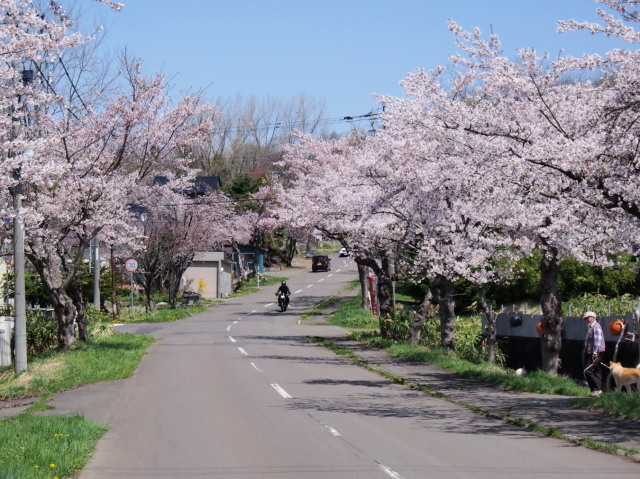 東明公園で花見、少し遠出して美唄へ_c0360399_21094206.jpg