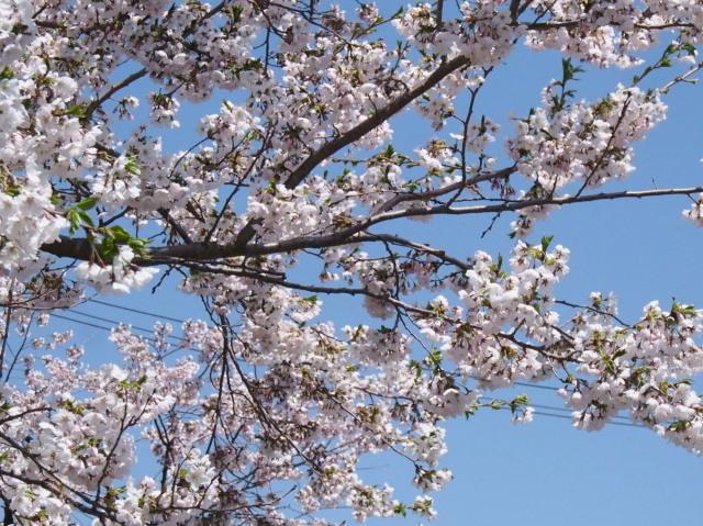 東明公園で花見、少し遠出して美唄へ_c0360399_21182319.jpg