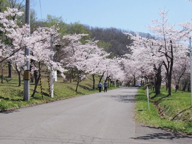 東明公園で花見、少し遠出して美唄へ_c0360399_21203412.jpg