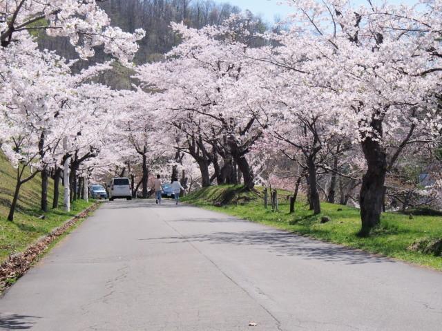 東明公園で花見、少し遠出して美唄へ_c0360399_21210010.jpg