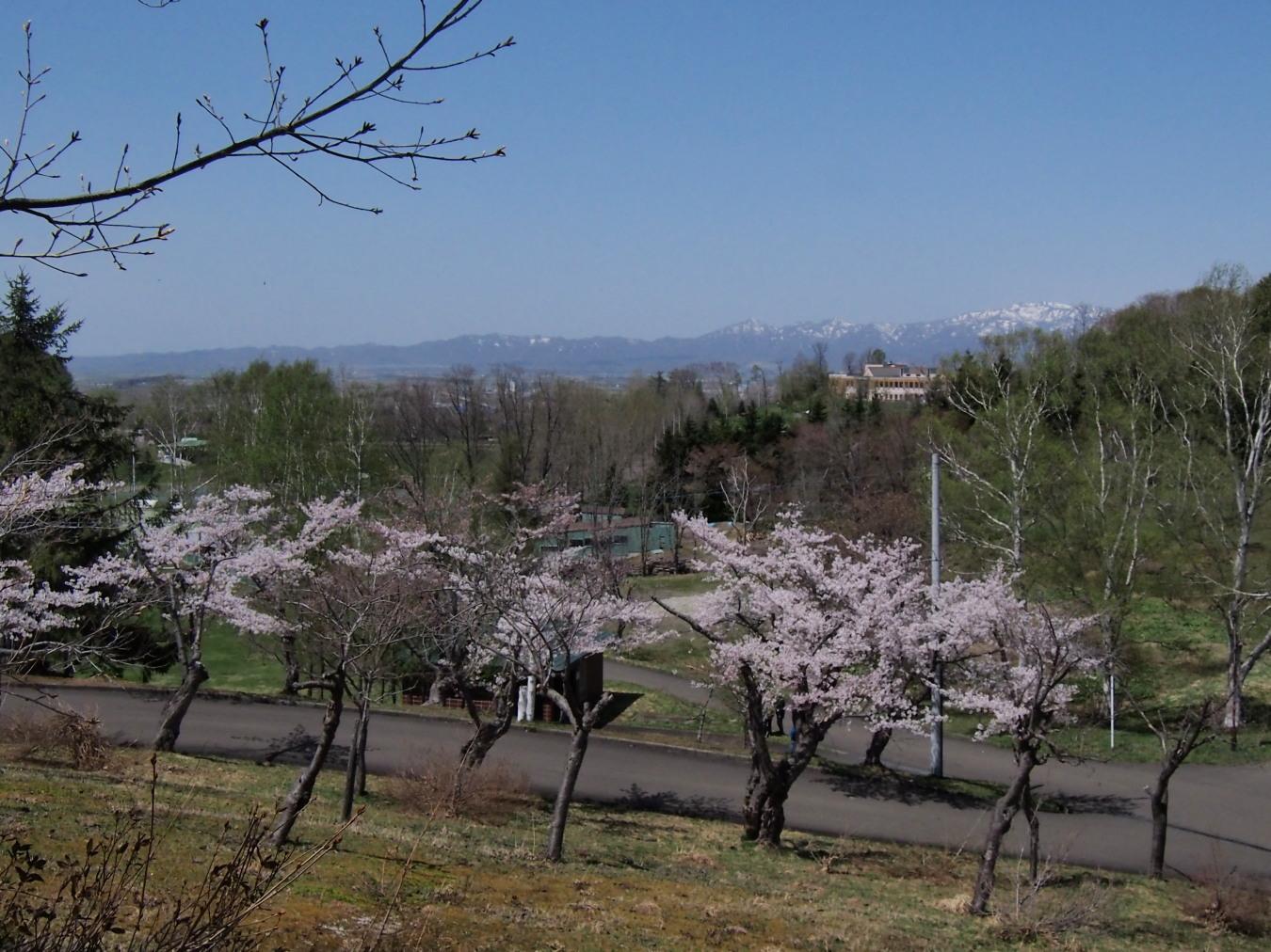 東明公園で花見、少し遠出して美唄へ_c0360399_21254756.jpg
