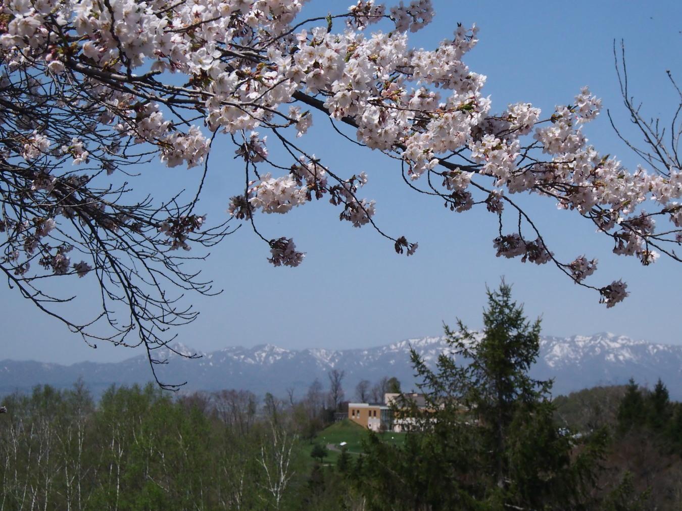 東明公園で花見、少し遠出して美唄へ_c0360399_21261791.jpg