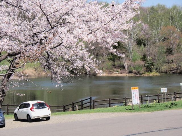 東明公園で花見、少し遠出して美唄へ_c0360399_21265590.jpg