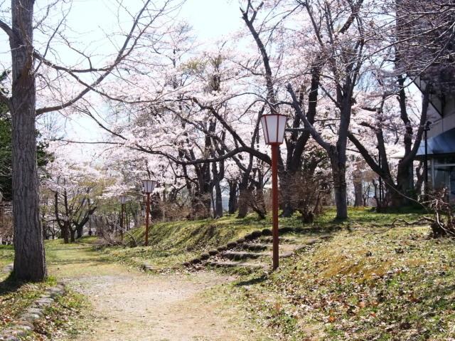 東明公園で花見、少し遠出して美唄へ_c0360399_21272669.jpg