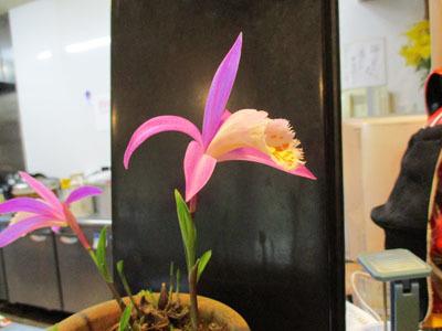 今年もトキソウが咲きました。_c0194003_10071790.jpg