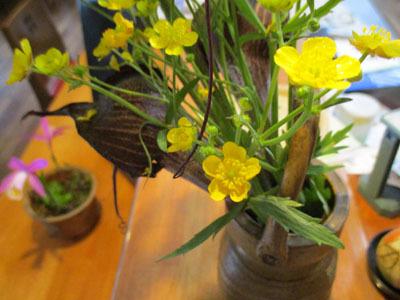 今年もトキソウが咲きました。_c0194003_10075744.jpg