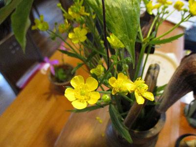 今年もトキソウが咲きました。_c0194003_10080900.jpg
