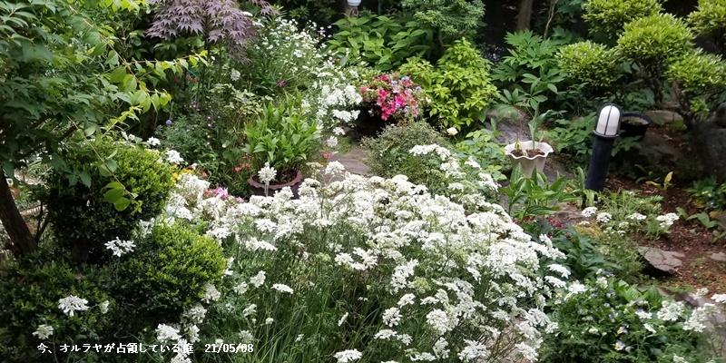 母の日、庭の花、ワクチン予約、N叔母_c0051105_22531651.jpg