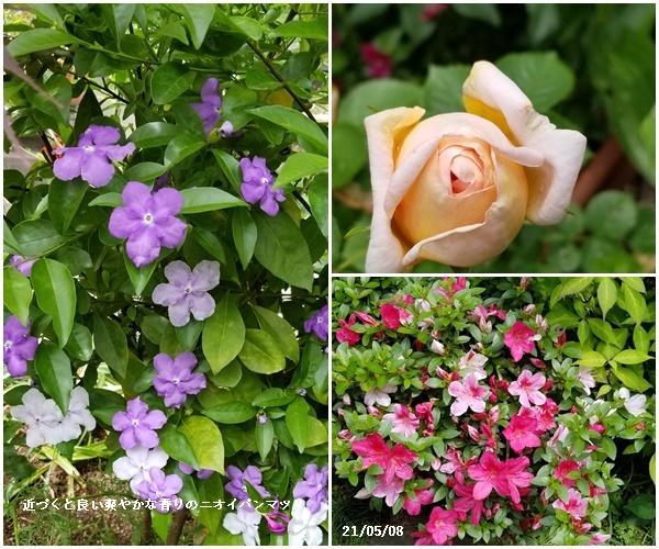 母の日、庭の花、ワクチン予約、N叔母_c0051105_22543842.jpg