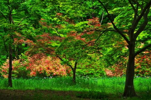 武蔵丘陵森林公園の晩春3_a0263109_22442985.jpg