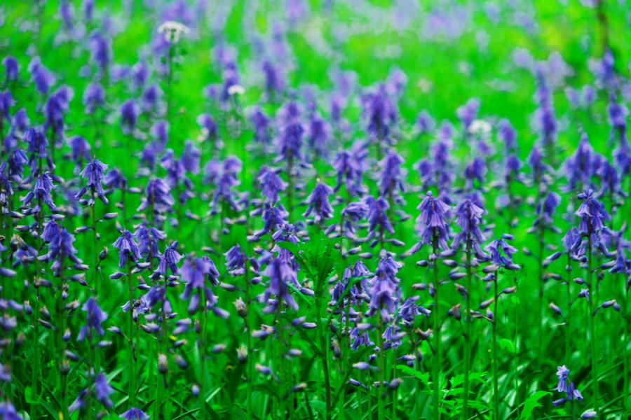 武蔵丘陵森林公園の晩春3_a0263109_22443043.jpg