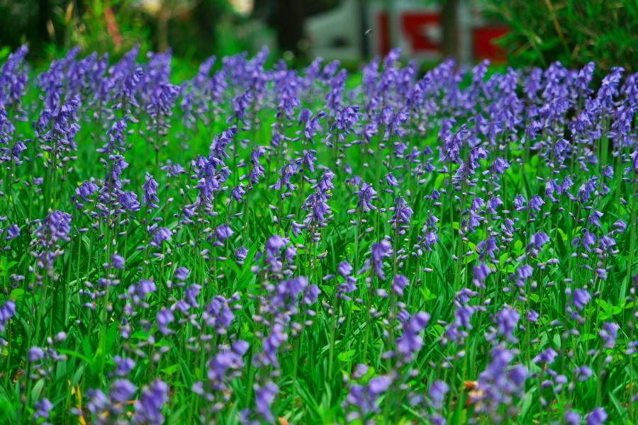 武蔵丘陵森林公園の晩春3_a0263109_22443062.jpg