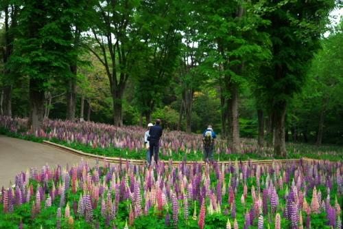 武蔵丘陵森林公園の晩春3_a0263109_22443076.jpg