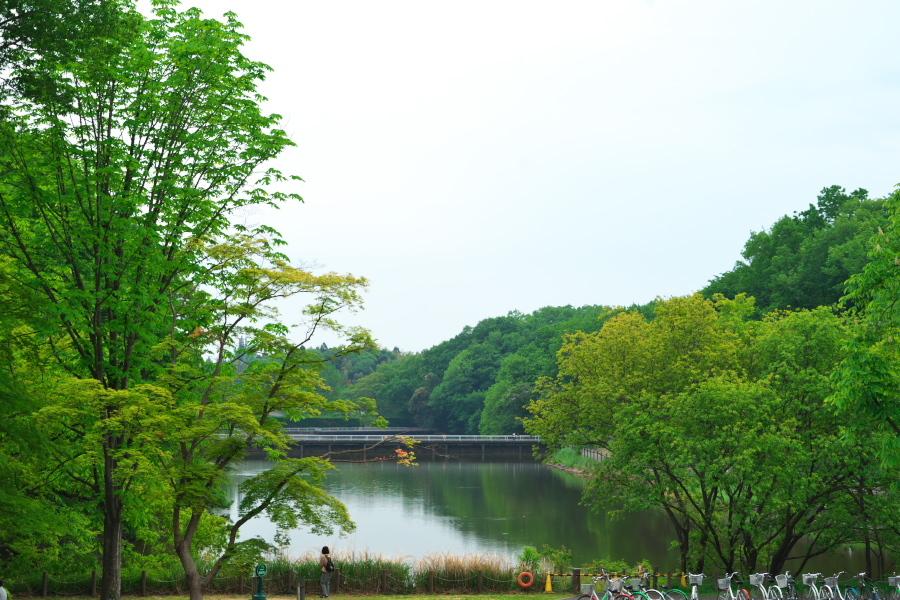 武蔵丘陵森林公園の晩春3_a0263109_22443095.jpg