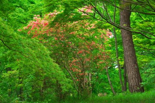 武蔵丘陵森林公園の晩春3_a0263109_22443101.jpg