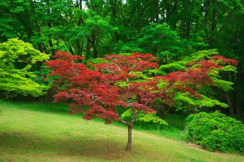 武蔵丘陵森林公園の晩春3_a0263109_22443157.jpg