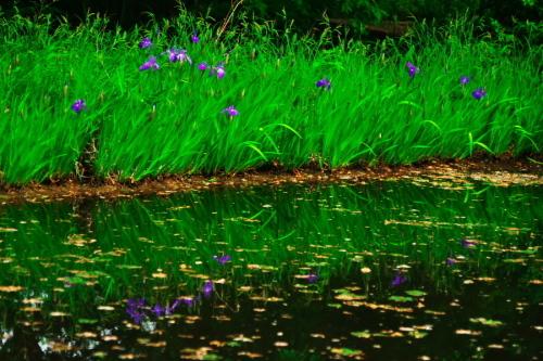 武蔵丘陵森林公園の晩春3_a0263109_22450243.jpg