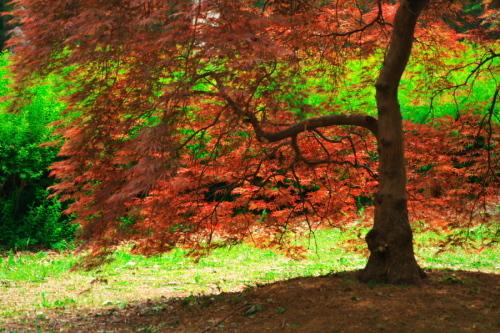 武蔵丘陵森林公園の晩春3_a0263109_22450248.jpg