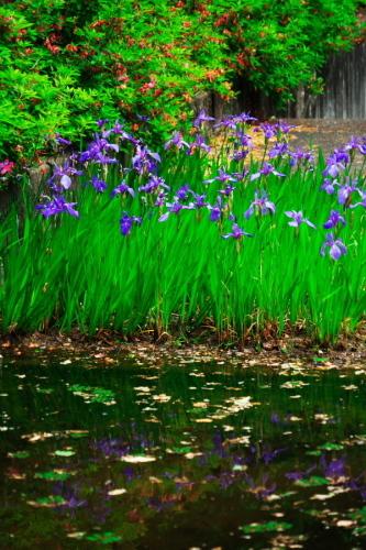 武蔵丘陵森林公園の晩春3_a0263109_22450281.jpg