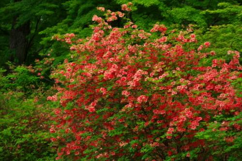 武蔵丘陵森林公園の晩春3_a0263109_22450345.jpg