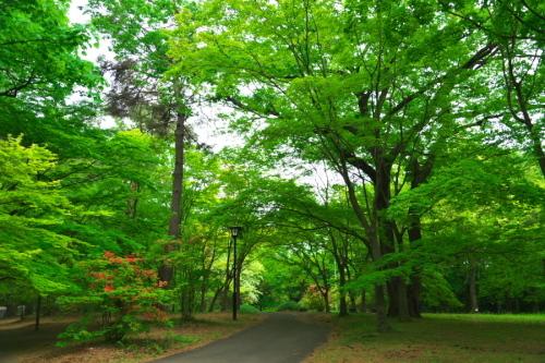 武蔵丘陵森林公園の晩春3_a0263109_22450379.jpg
