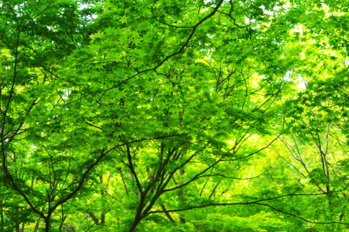武蔵丘陵森林公園の晩春3_a0263109_22450414.jpg