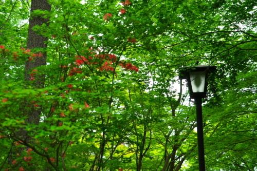 武蔵丘陵森林公園の晩春3_a0263109_22450423.jpg