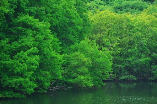 武蔵丘陵森林公園の晩春3_a0263109_22453242.jpg