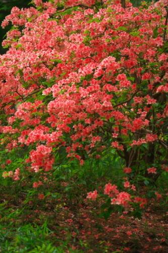 武蔵丘陵森林公園の晩春3_a0263109_22453310.jpg