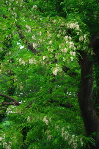 武蔵丘陵森林公園の晩春3_a0263109_22453324.jpg