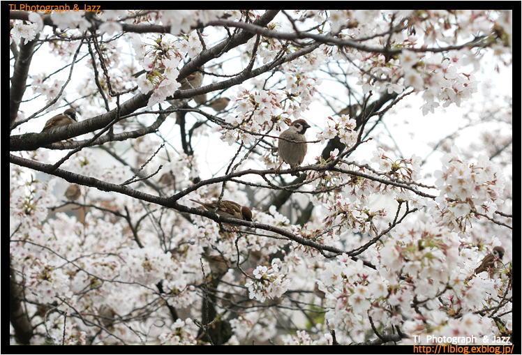 上野の鳥 Part 3_b0134013_04241736.jpg