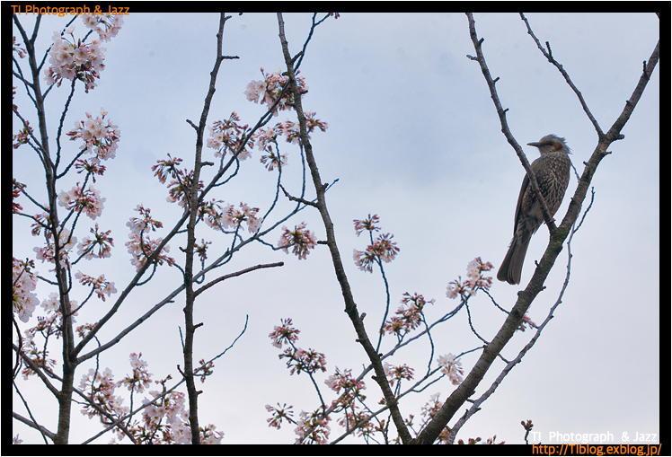 上野の鳥 Part 3_b0134013_04241737.jpg