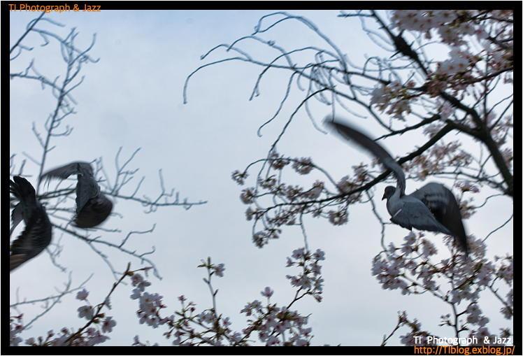 上野の鳥 Part 3_b0134013_04241742.jpg