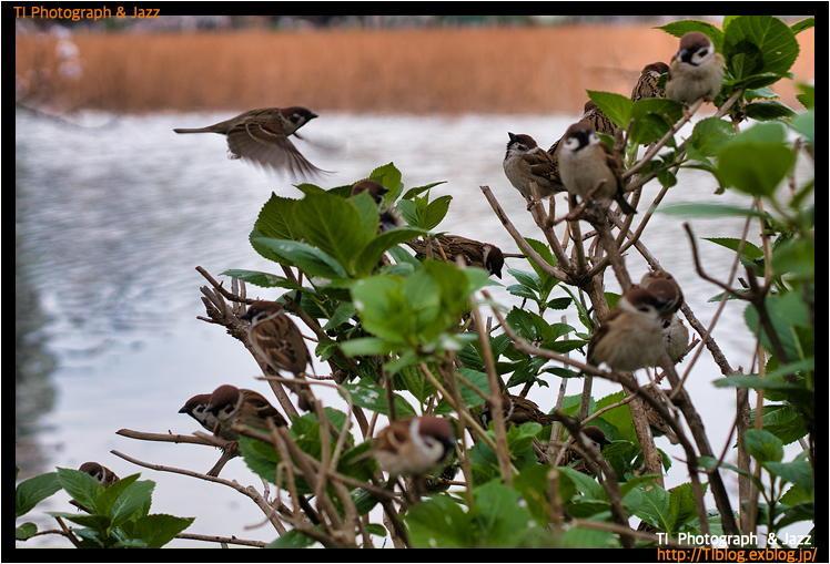 上野の鳥 Part 3_b0134013_04241790.jpg