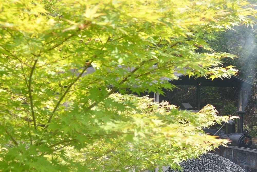 9号12号機関車共演_e0373930_19410353.jpg