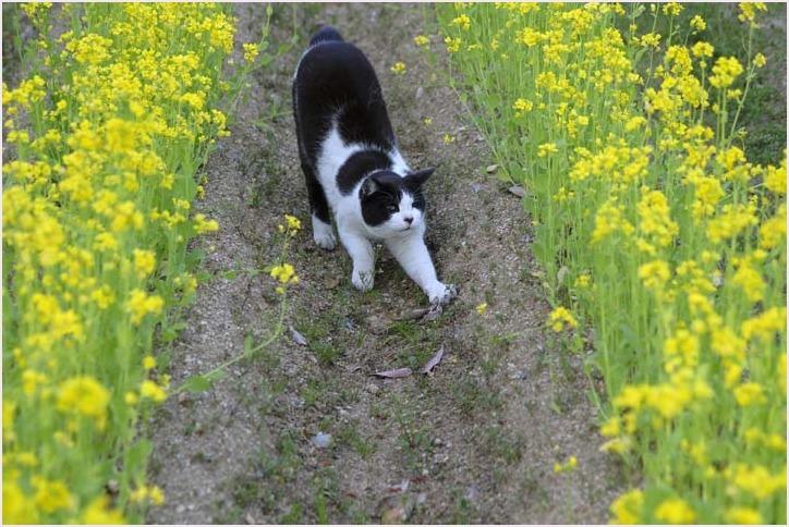 菜の花と猫_f0166234_08524863.jpg