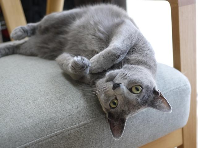 猫のお留守番 ルウちゃん編。_a0143140_21401739.jpg