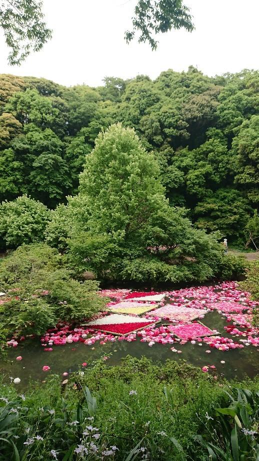 つくば牡丹園「花筏」_f0323446_18325381.jpg