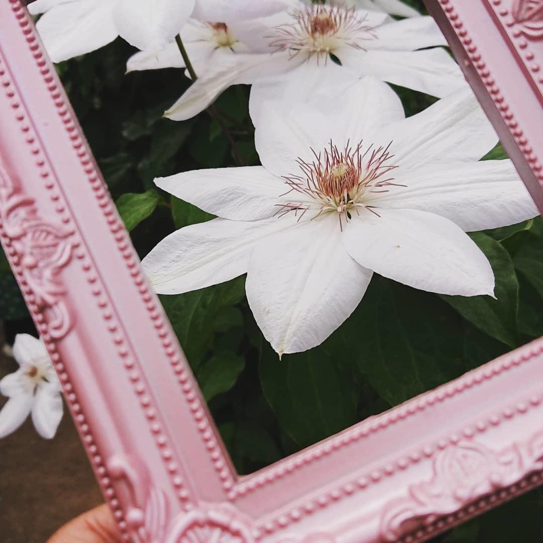 つくば牡丹園「花筏」_f0323446_22423393.jpg