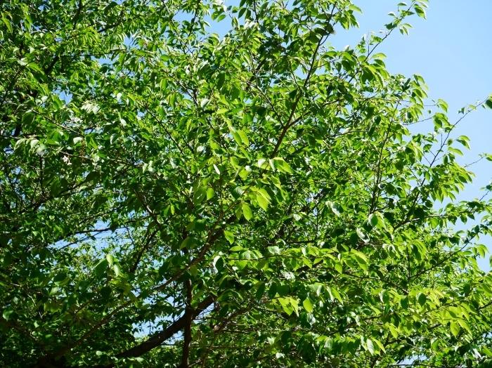 緑が美しい和歌山城公園  2021-05-11 00:00_b0093754_22533224.jpg