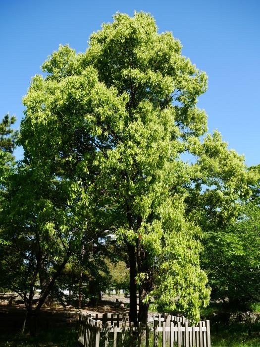 緑が美しい和歌山城公園  2021-05-11 00:00_b0093754_22534412.jpg