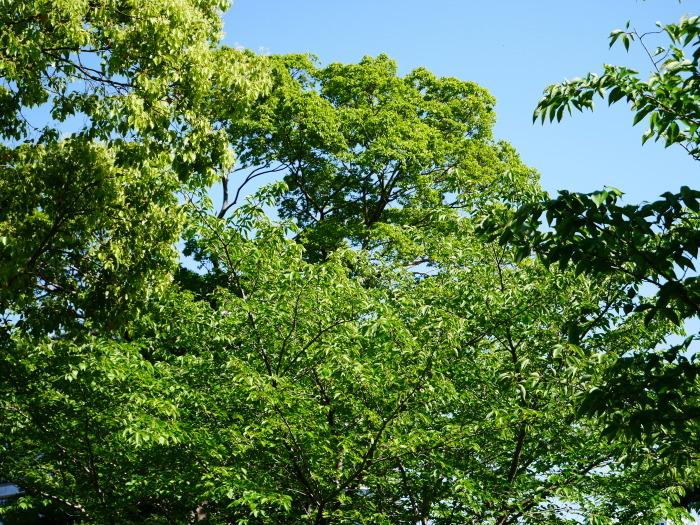 緑が美しい和歌山城公園  2021-05-11 00:00_b0093754_22535616.jpg