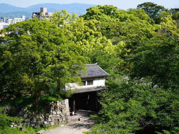 緑が美しい和歌山城公園  2021-05-11 00:00_b0093754_22540727.jpg